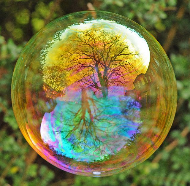 Tree Foregrounded in a Soap Bubble    Trees reflected in a soap bubble. I'm amazed at how the tree at the top seems so foregrounded. I've been experimenting with ISO and aperture today. I love the sharpness of the tree here and how you can actually see shadows on the trunk and branches.