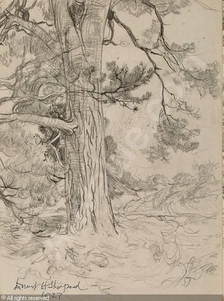 17 best images about drawing trees on pinterest trees for Rough and milne