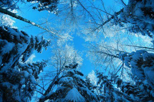 flor azul jardim secreto : flor azul jardim secreto:1000 imagens sobre XBeautiful Too no Pinterest