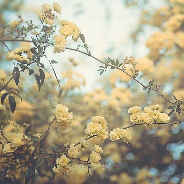 150 best Maleah Torney Photography images on Pinterest | Art ...