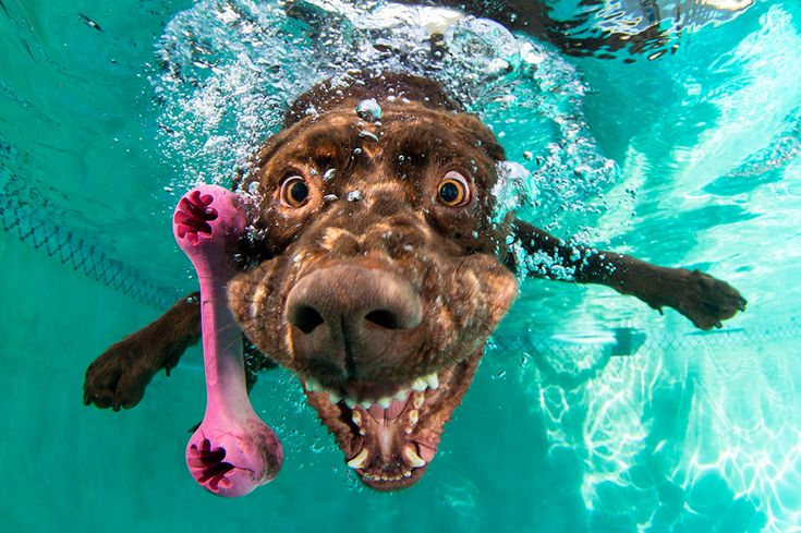 Dogs Fetching Things – Hunde unter Wasser | Blogbuzzter.de