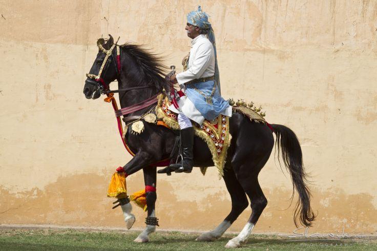 Marwari stallion Gajraj