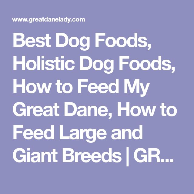 Best Dog Foods, Holistic Dog Foods, How to Feed My Great Dane, How to Feed Large and Giant Breeds   GREATDANELADY.COM