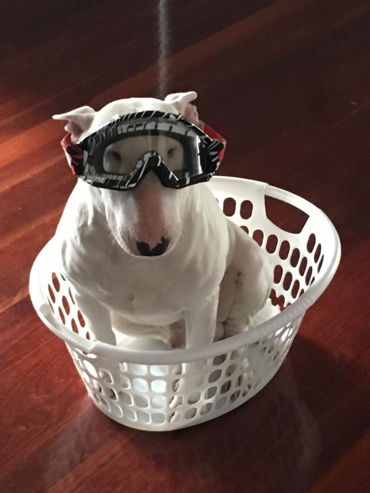 Doggles in place.  Rocket ship fueled!  Blast off in 3, 2, 1!