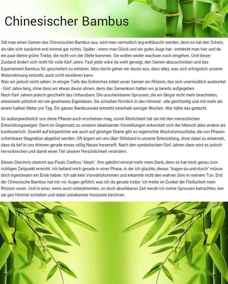 Der chinesische Bambus, ein Mut machendes Gleichnis