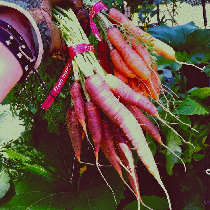 Best 25+ Winter Vegetable Gardening Ideas On Pinterest