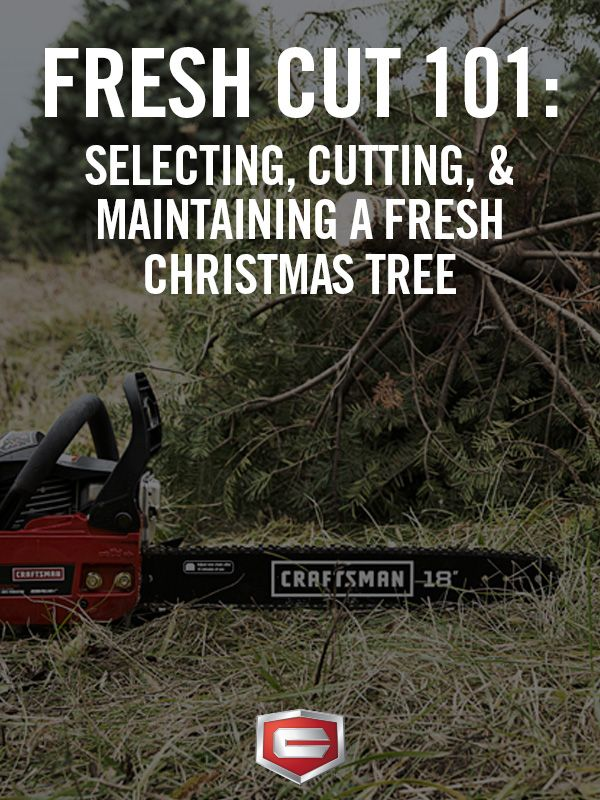 Fresh Cut 101: How to select, cut and keep your Christmas tree fresh.