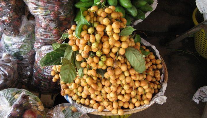 Бирманский виноград: вечнозеленое плодовое дерево и самый экзотический фрукт