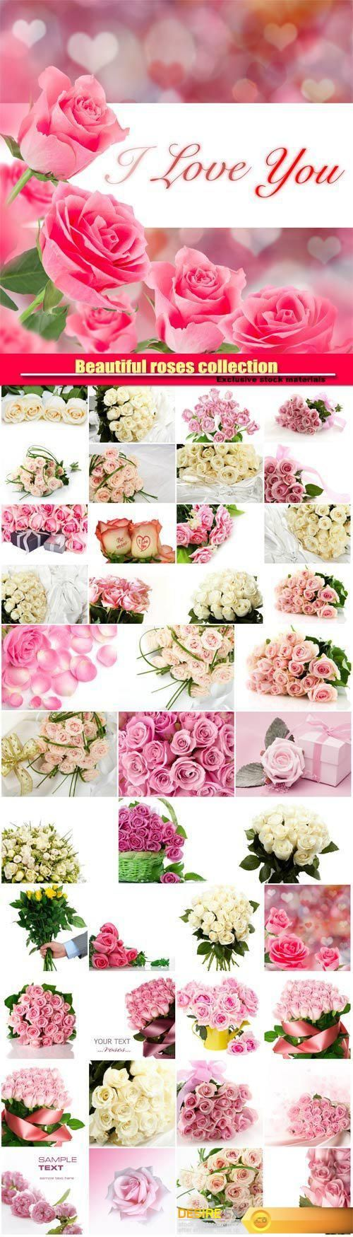 Beautiful pink and white roses, collection of romantic backgrounds  http://www.desirefx.me/beautiful-pink-and-white-roses-collection-of-romantic-backgrounds/
