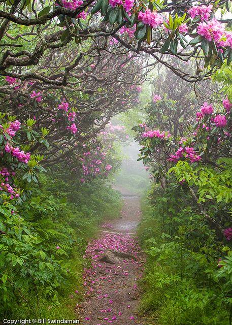 Tunnel of flowers, North Carolina