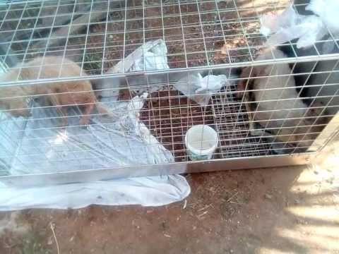 Nikiti puppies - Κουταβακια Νικήτης - YouTube