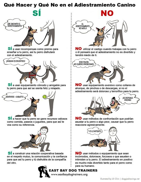 ¿Estás intentando adiestrar a tu #perro? ¡Toma nota a estos consejos! www.clinica-veterinaria-loranca.com