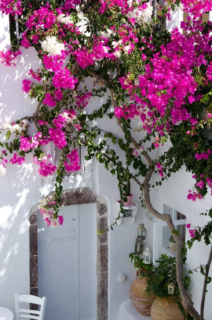 Bodrum, Turkey. Love the whitewashed walls and vibrant pink flowers!