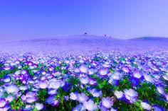一面に広がるフラワーカーペット!死ぬまでに見たい日本国内の「花畑」8選 | RETRIP[リトリップ]