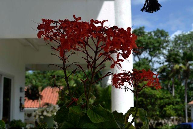 Flores en todas sus variedades, colores y aromas. Nos encanta la naturaleza por ello tenemos grandes jardines para que las disfrutes en tu viaje a San Andrés islas, Colombia