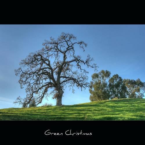 45 Arbor Oak: Oaks Sacred To Druids - John Morgan