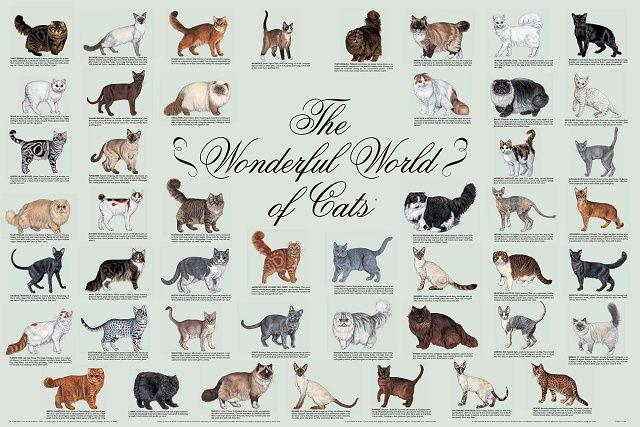"Cat Species Identification | The Fourth Edition of ""The Wonderful World of Cats"" poster came off ..."