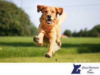 LA MEJOR CLÍNICA VETERINARIA DE MÉXICO. Los perros requieren y piden afecto a sus dueños, cosa que ellos devuelven con creces. Esto incluye caricias, mimos y juegos. En Clínica Veterinaria del Bosque contamos con médicos expertos para atender y cuidar la salud de tu mascota. Te invitamos a acudir a nuestras instalaciones, para que podamos atender a tu mascota de manera preventiva ante cualquier enfermedad o problema de salud. #veterinariadelbosque