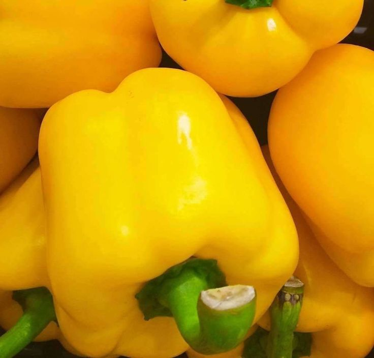 Seeds for Pepper (sweet) 'Golden California Wonder' - (Capsicum annuum) – Amkha Seed