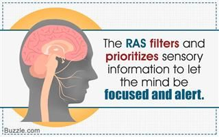 Fact about Reticular Activating System