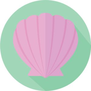 Seashell   Design   Flat   Icon   Illustration   Nature   Ocean   Seaside   Kayla Folino