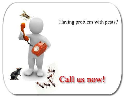 Pest control services in Bangalore http://www.gapoon.com/  http://www.gapoon.com/pest-control-services-bangalore