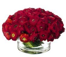 Red Italian Ranunuculus- Michael George NYC