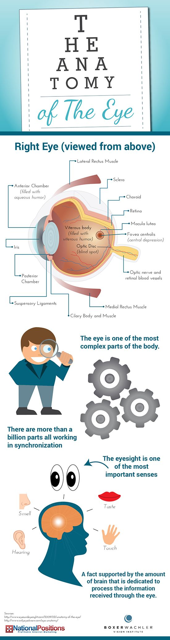 60 best Eye Information images on Pinterest | Eye facts, Eyes and ...