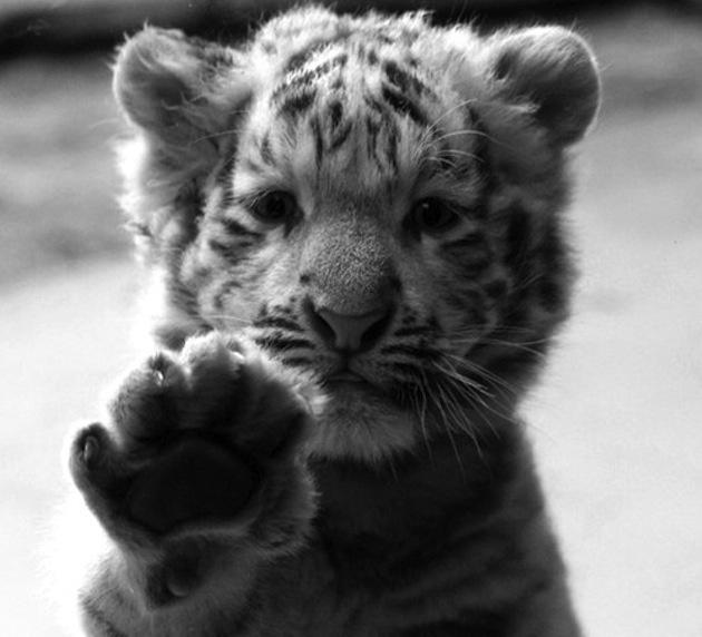 High Five   Cute Animals   Pinterest