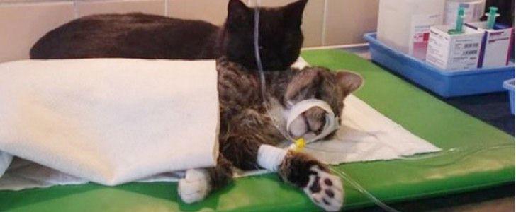 Este Pequeño Gatito Cuida De Otros Animales En El Refugio De Animales, Aunque No Lo Creas... - #¡WOW!, #animales, #Noticias, #Vida  http://www.vivavive.com/gato-enfermera/