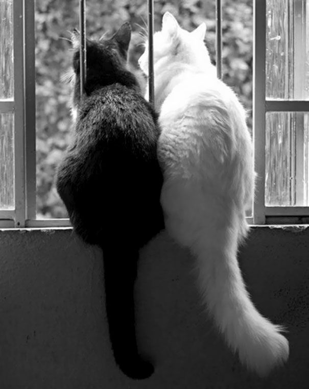 Click to see an amazing photo set of black and white cats that compliment each other perfectly.