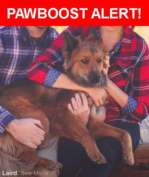 Please spread the word! Vesper was last seen in Las Vegas, NV 89149.    Nearest Address: Deer Spring and Grand Montecito