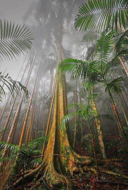 Mount Tamborine Rainforest, South East Queensland, Australia