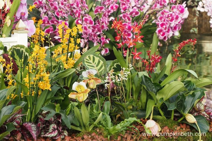 The Thai Palace is beautifully planted with its own little orchid garden! Pictured inside the Princess of Wales Conservatory, at the 2018 Orchid Festival, at the Royal Botanical Gardens, Kew.