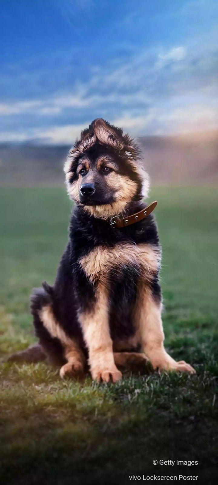 Pin by Durgashankar Jogi on durga in 2020 Forever puppy