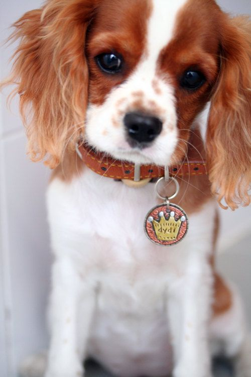 Small to Medium Dog ID Tag CROWN pet id tag by DoggoneTags on Etsy, $25.00