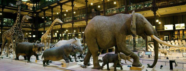Caravane africaine - Grande Galerie de l'Évolution © MNHN - JC Domenech