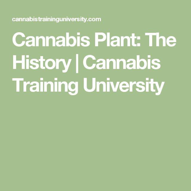 Cannabis Plant: The History   Cannabis Training University