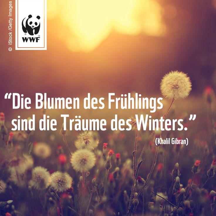 """Zitat zum Sonntag: """"Die Blumen des Frühlings sind die ..."""