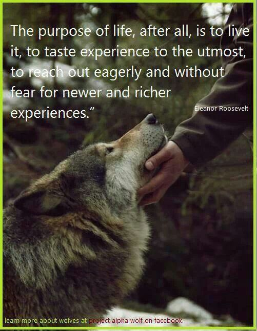 Awesome quote & of course I ♥ My Wolves · Eleanor RooseveltWildernessReal ...
