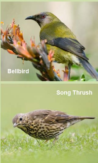 NZ Bird Survey - which many NZers take part in annually.