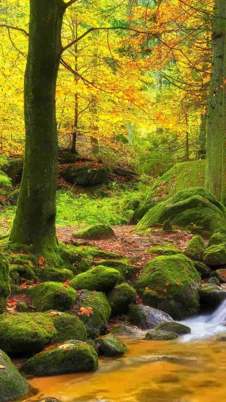 Mossy Forest Forest Nature Landscape Trees Mountains Fall Beautiful Nature Beautiful Landscapes Landscape