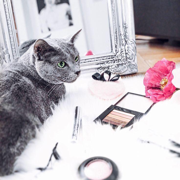 Meine Katze scheint MakeUp richtig zu mögen!