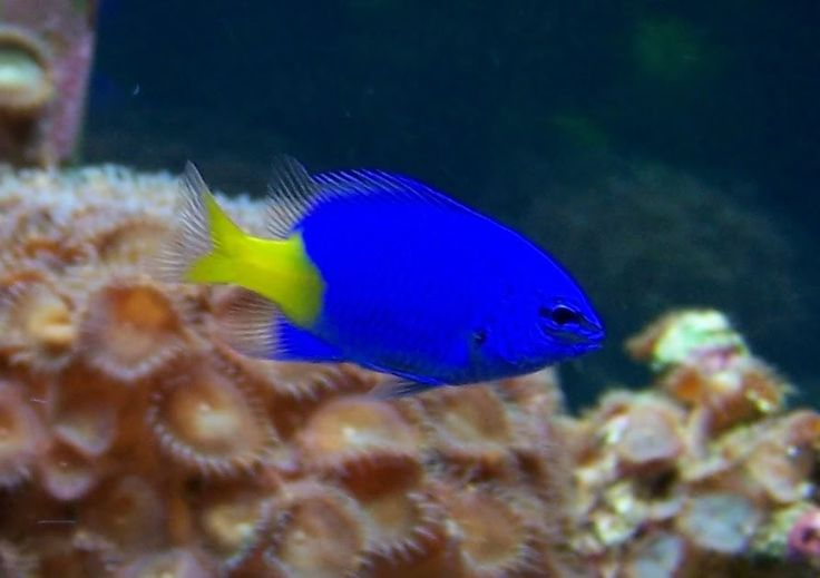 73 best look inside my exotic aquarium images on for Yellow fish tank water