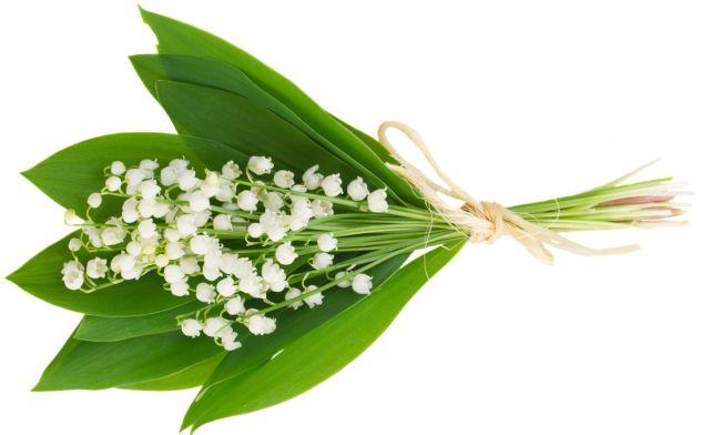 17 meilleures id es propos de brin de muguet sur pinterest muguet bricolage 1er mai et - Photos de bouquet de muguet ...