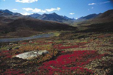 Régions de végétation - l'Encyclopédie Canadienne