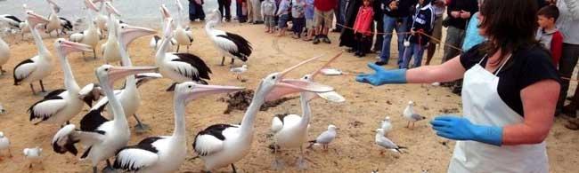 San Remo Population Phillip Island