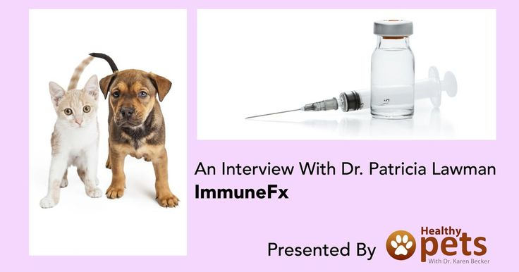 Dr. Patricia Lawman has developed a cancer vaccine called ImmuneFx, which has been used to treat over 30 different types of cancers in dogs, cats, and horses. http://healthypets.mercola.com/sites/healthypets/archive/2015/10/11/immunefx-pet-cancer-vaccine.aspx