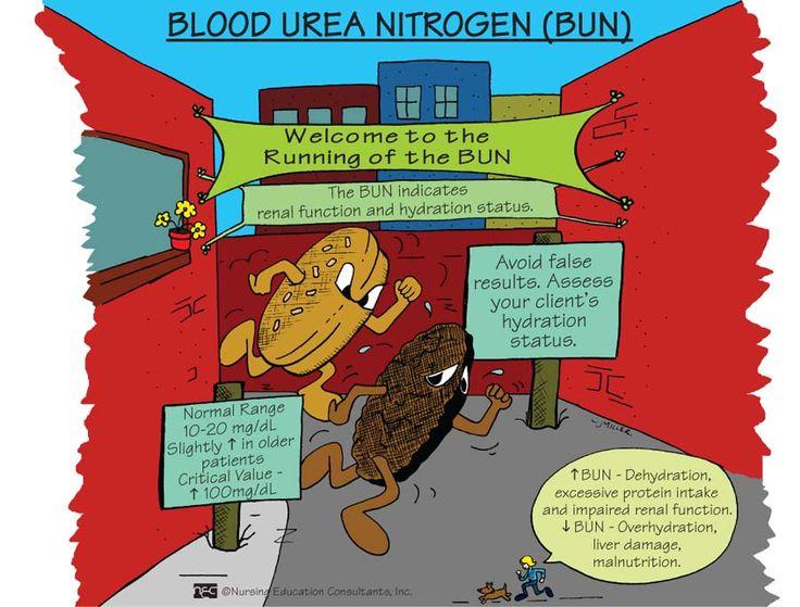 Displaying Blood Urea Nitrogen (BUN).jpg