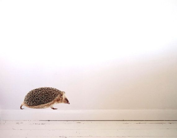 Hedgehog Wall Decal by #JuneFoxStudio on Etsy